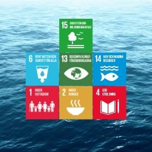 Pro4u_s miljöpåverkan